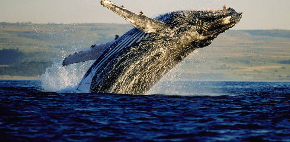 whale-route_960_472_80auto_s_c1_center_bottom